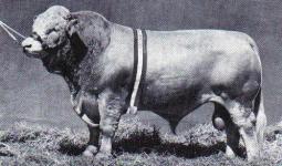 Dunmore Hansa