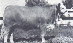 Dunmore Hildegarde