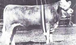 Sundowner Ranches Evelyn