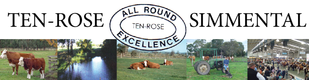 Ten-Rose International Simmental