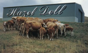 Hazel Dell Stud Shed