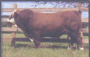 Prostock-Hugo-300x189