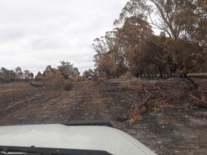 Fire Tonimbuk 2.3.19 Roberts Farm back paddock