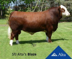 SFJ Altas Blaze BEST and clear